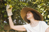 Senior Hispanic woman picking fruit — ストック写真