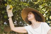 Senior Hispanic woman picking fruit — Stock Photo