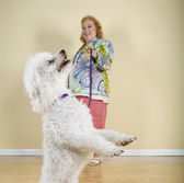Dog on leash performing trick — Stock Photo