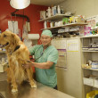 Veterinarian listening to a dog's heartbeat - Stockfoto