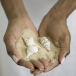 Close up of hands holding sand and seashells - Stockfoto