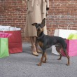 Low section of woman with dog and shopping bags — Stockfoto