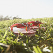 Foto Stock: Flip-flops resting in grass