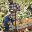 Stock Photo: Africboy standing with wagon in pumpkin patch