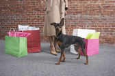 Low section of woman with dog and shopping bags — Stock Photo