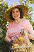 Senior Hispanic woman picking fruit — Stockfoto