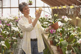 Hispanic woman looking at potted plant in greenhouse — Stock Photo