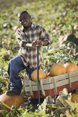 African boy standing with wagon in pumpkin patch — Stok fotoğraf