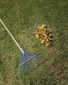 Rake and pile of leaves in grass — Stockfoto