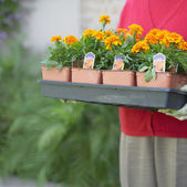 Midsection of woman carrying tray of flowers — Stock Photo