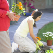 Two women planting flowers — Stock Photo