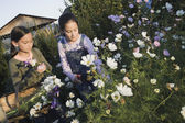 Two Pacific Islander girls picking wildflowers with basket — Stock Photo