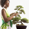 Woman trimming bonsai tree - Stock Photo