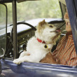 Dog licking elderly man sitting in old pickup truck — Stock Photo
