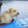 Side view of dog sitting in kayak with hands of man - Foto Stock