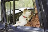 Dog licking elderly man sitting in old pickup truck — Stock Photo