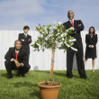 Multi-ethnic businesspeople looking at money tree — Stock Photo