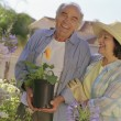 Senior Hispanic couple gardening — Stock Photo