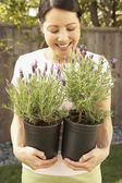 Asian woman smelling lavender plants — Stock Photo