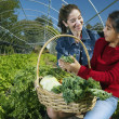 Multi-ethnic mother and daughter harvesting organic produce — Stock Photo #23314380