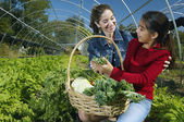 Multi-ethnic mother and daughter harvesting organic produce — Stock Photo