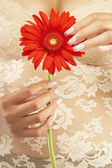 Close up of Mixed Race woman holding flower — Stock Photo