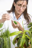 Maltese female scientist injecting syringe into plant — Stock Photo