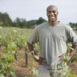 African man standing in vineyard — Stock Photo
