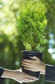 Close up of Hispanic businesswomen holding potted tree — Stock Photo