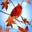 The  northern cardinal sitting on a maple branch - Stock Vector