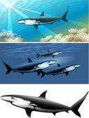 Shark set — Stock Vector