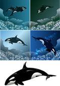 Killer whale set — Stock Vector