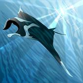 Manta ray — Stock Photo