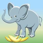 The baby elephant — Stock Photo