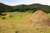 The dry grass combined on storage — Stock Photo