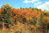 Paints of autumn — Stock Photo