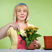 Mature housewife takes care of the flowers — Stock Photo