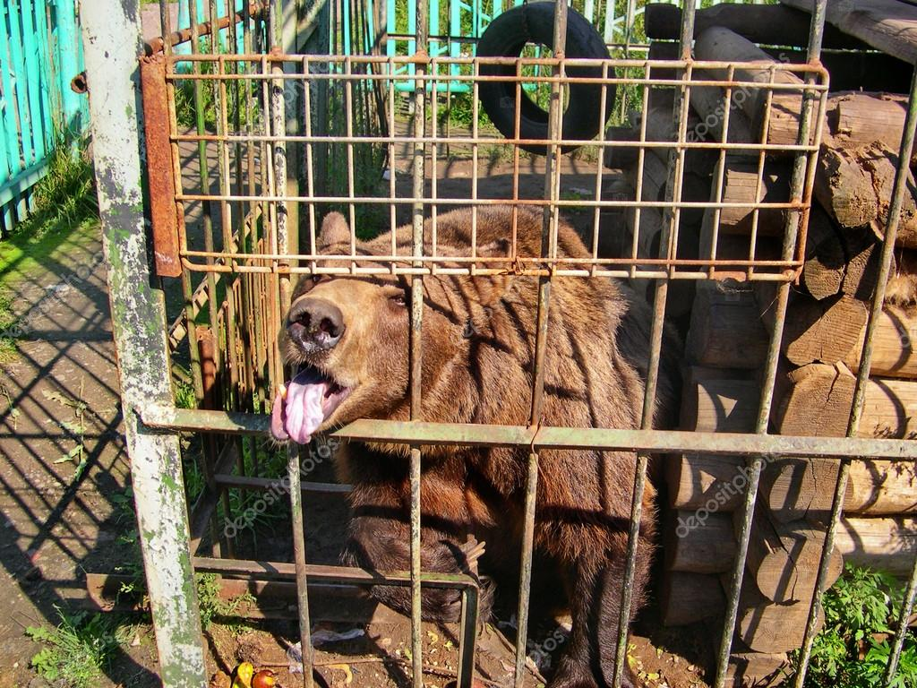 is keeping animals in a zoo cruel So, the goverment built the zoo in order to keep animals zoo is not real habit for animals people have agree and disagree opinion about zoo and the condition of animals which live in captivity.
