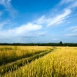Country road through the wheaten field — Stock Photo #13337899