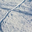 Traces on snow — Stock Photo #13337903