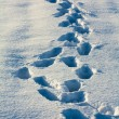 Traces on a snow — Stock Photo
