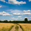 Country road through the wheaten field — Stock fotografie