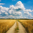 Country road through the wheaten field - Stock Photo