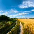 Country road through the wheaten field — Stok fotoğraf