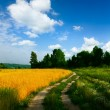 Country road through the wheaten field — Stock Photo #13338128