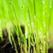 Grass and drop — Stock Photo