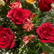Roses — Stock Photo #13340714