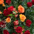 Roses — Stock Photo #13340731