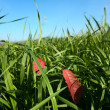 Grass, leaves and blu sky — Stock Photo