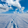 Traces on snow — Stock Photo #13340893